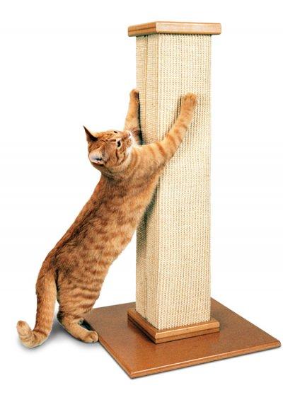 Rascadores-para-gatos-son-necesarios